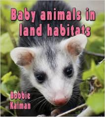 Baby Animals in Land Habitats: The Habitats of Baby Animals