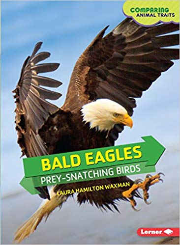 Bald Eagles: Prey-Snatching Birds (Comparing Animal Traits)